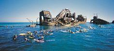 snorkel tangalooma wrecks