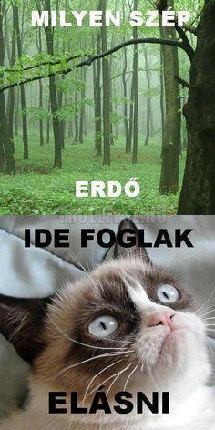 Grumpy Cat Humor, Funny Cat Memes, Funny Cats, Memes Humor, Funny Pix, Funny Images, Funny Photos, Walking Dead Funny, Friday Humor
