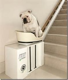 Automatic doggie stairs