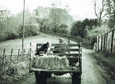 James Ravilious: Frank Pickard and his dog Flash homeward bound People Poses, North Devon, Vintage Photography, Farm Life, Britain, Monster Trucks, Aqa, Film, Farming