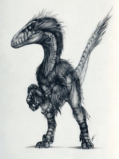 Deinonychus was smallish, but far more like the classic raptors from Jurassic Park than actual Velociraptors were. Go figure.