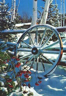 Snow-covered wheel, leaning again a split-rail fence, with birch and evergreens…