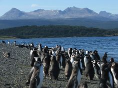 Chile Patagonia plateau,The land of icebergs and glaciers..... AND I might add.... PENGUINS!