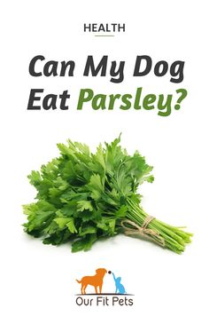 Can my dog eat parsley? Yes! And can my puppy eat parsley? Again, yes! Parsley is also healthy for dogs. It can help relieve your pup's arthritis, fight urinary tract infections, and can even help with preventing cancer. It's best to give your fur baby dried parsley, though it's also safe to use fresh leaves or even make a tea for him. Dried parsley can easily be mixed in with your pup's normal dog food.