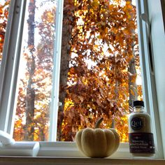 Windows as living art from our lab. Art Of Living, Herbalism, Lab, Pumpkin, Outdoors, Peace, Windows, Vegetables, Nature