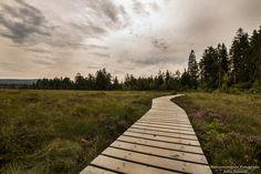 Hochmoor bei Torfhaus 💚 #heimatharz #harzliebe #harzmomente #natur #naturliebhaber #canon #canoneos700d #canonmoment