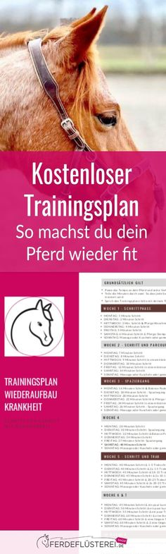 Training plan after the break! This is how you make your horse fit again - Do you have an older horse that urgently needs to build muscle or a sick horse that has stalled beh - Muscle Fitness, Health Fitness, Fitness Abs, Workout Fitness, Biceps, Dicker Pony, Horse Riding Tips, Hobby Horse, Want To Lose Weight