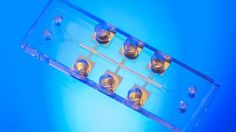Pfizer turns to Charles Stark Draper Laboratory for 'organ-on-a-chip' tech