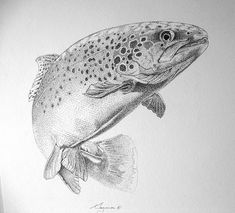 Brown Trout I love this pic