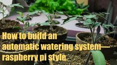 Raspberry Pi Automatic Watering System