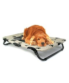 Love this Paw Print Folding Pet Cot on #zulily! #zulilyfinds