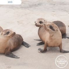 Over the years, check out these lucky pups that SeaWorld rescued and returned to the ocean!  #365DaysOfRescue
