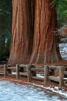 California Sequoia Redwoods by Jeffrey Campbell (such as are in Sequoia National Park? All Nature, Amazing Nature, Sequoia National Park, National Parks, Beautiful World, Beautiful Places, Peaceful Places, Great Places, Places To Go