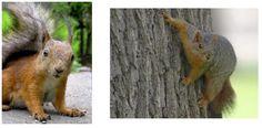 squirrel-1.png 572×282 pixels