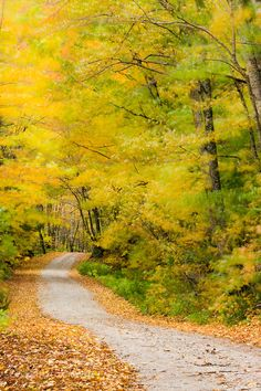 Wind blurs the fall colors along Kelly Stand Road, Green Mountain National Forest, Vermont│Jerry & Marcy Monkman