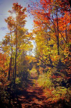 Lane in an autumn forest (Sainte-Sophie, Québec) by Yourick Pilon / 500px