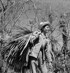 Carnaúba, c. 1951, Ceará foto de Marcel Gautherot