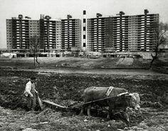 압구정 (1978, 전민조)