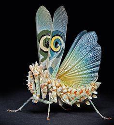 African Spiny Flower Mantis