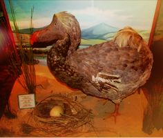 East London – The only Dodo egg in the world  – wanaabeehere