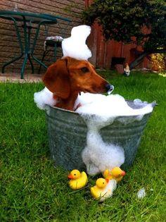 Iz takin' my daily daschund bath.