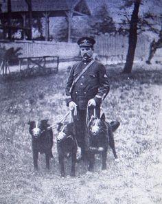 Los perros Black, Dick y Job, pertenecientes al Departamento de la Policia de Paris. Mayo de 1907. The dogs Black, Dick and Job, belonging to the Department of the Police of Paris. May, 1907.