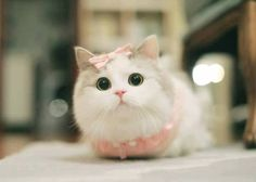 TOP 35 Funny Cats and Kittens Pictures - Animais bebés fofinhos wild funny Fluffy Kittens, Cute Cats And Kittens, Baby Cats, Cool Cats, Kittens Cutest, Pretty Cats, Beautiful Cats, Cute Baby Animals, Funny Animals