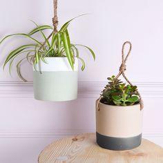 Hanging plants +200%