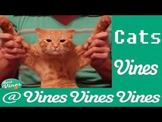 Funny Cats Vine Compilation 2015 - YouTube