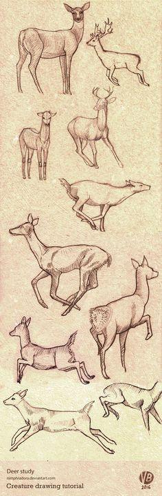 deer_poses_study_by_nimphradora-d9qgxcx.jpg (512×1562)