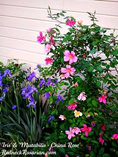 Blooming Monday - What's Blooming This Week In an Alabama Garden
