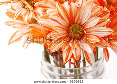 Google Image Result for http://image.shutterstock.com/display_pic_with_logo/147544/147544,1203471223,5/stock-photo-orange-and-white-flowers-in-a-mason-jar-9605362.jpg