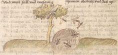 Otto von Passau: Die 24 Alten (Bruchstücke). Cyrillusfabeln, dt. von Ulrich von Pottenstein. Aderlasstraktate. Thomasin von Zerclaere: Der welsche Gast Bayern, um 1457 Cgm 340  Folio 80