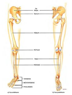 hebergeur image Skeleton Muscles, Formation Yoga, French Practice, Musculoskeletal System, Medical Humor, Nursing Students, Good To Know, Coaching, Massage