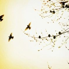 Bird Photograph  Nature Photography  Trees  Spring  by AliciaBock,