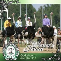 The Ostrich, Ostriches, Saddles, Countries, Africa, Racing, Facts, Horses, Christmas Ornaments