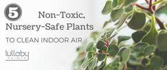 non-toxic nursery-safe plants - lullaby paints