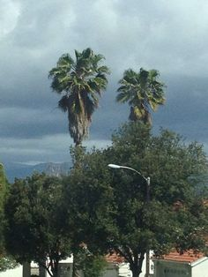 goodmorning palm trees and mountains