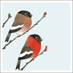 Matt Sewell Birds 389078