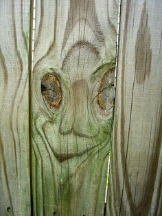 Face in the fence. Photography by Abbey Cahill Things With Faces, Found Object Art, Strange Places, Hidden Face, Animals Images, Smile Face, Tree Art, Optical Illusions, Funny Faces