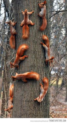 Suddenly, squirrels… hihi if they wouldn't run away all the time^^ I want one!!!