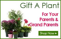 Buy plants in delhi,Plant nurseries in delhi,Gift a plant online in delhi,Buy plants online in delhi,Send plants online in delhi