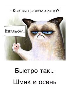 Cat Captions, Hello Memes, Russian Humor, Funny Cartoon Pictures, Funny Good Morning Quotes, Wit And Wisdom, Funny Phrases, Quotes And Notes, Grumpy Cat