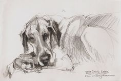 That Couch Look sketch, dog, Great Dane -- V....Vaughan