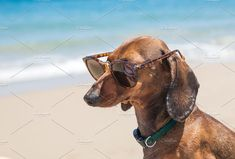 Dachshund dog with sunglasses by huertas19 on @creativemarket Dog Pictures, Cute Pictures, Thai Chi, Dog With Glasses, Artemis Fowl, Dachshund Dog, Wiener Dogs, Red Hats, Best Dogs