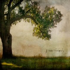 Thats how the light gets in. by jamie heiden, via Flickr