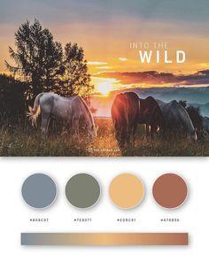 empower yourself with color psychology Flat Color Palette, Colour Pallette, Colour Schemes, Theme Color, Color Psychology, Psychology Facts, Nature Images, Color Of Life, Color Theory