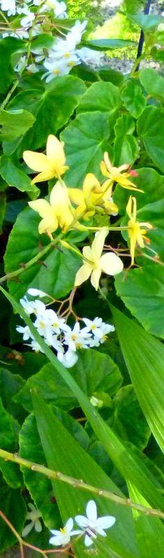 #caribbean #caribbeanlifestyle #foliage #tropicalplants