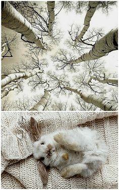 Birches <3