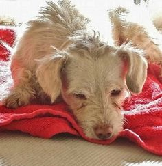 """Please share Duffy's sad story. This little guy is barely 2-years-old and is living on """"borrowed time."""""""